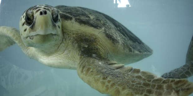 South Padre Island Sea Turtles Fun Things to do in South Padre Island for Families