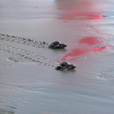 Our Seabrook Island Trip: So Many Adorable Baby Sea Turtles