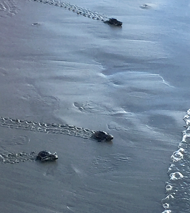 Seabrook Vacation Home Turtles