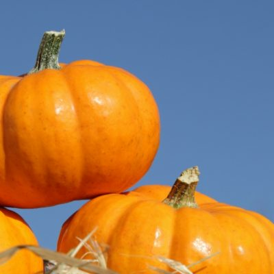 Fall Festivals In Michigan