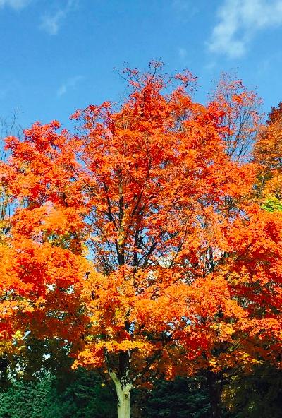 My Favorite Fall Photos So Far This Year