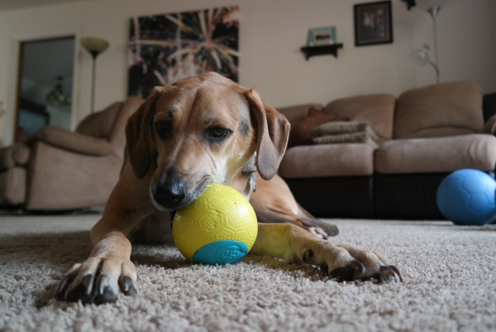 One World Play Project Dog Ball