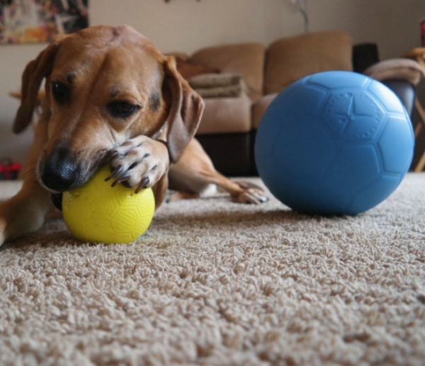 One World Play Project Indestructible Dog Ball