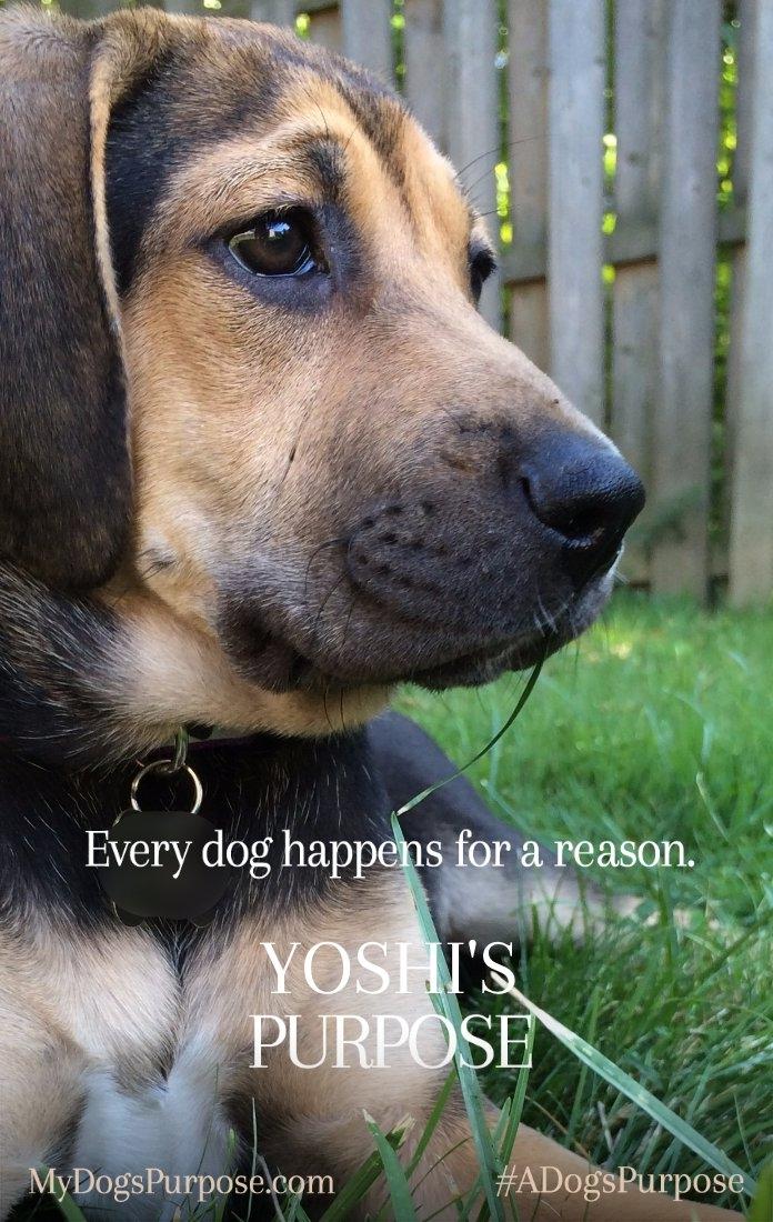 A Dog's Purpose Poster Yoshi