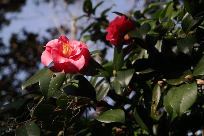 Myrtle Beach Brookgreen Gardens Flower