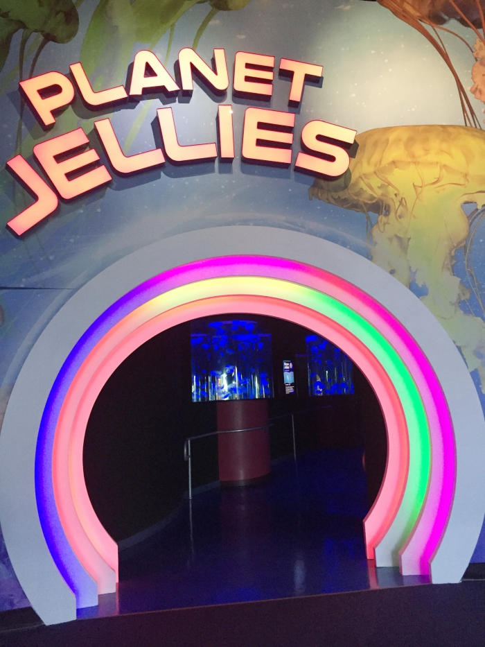 Myrtle Beach Ripley's Aquarium Planet Jellies
