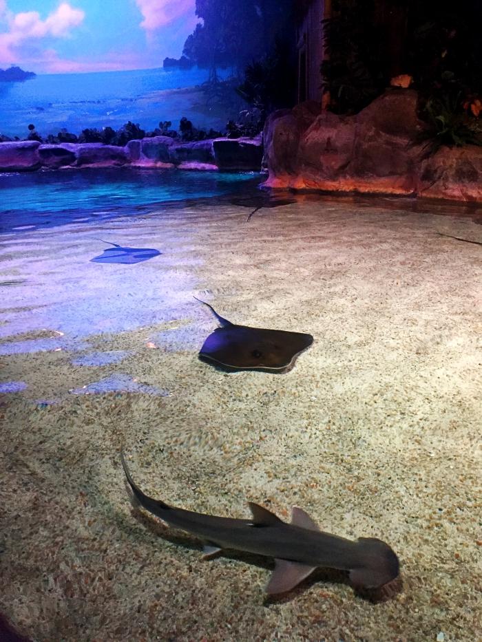 Myrtle Beach Ripley's Aquarium Stingrays