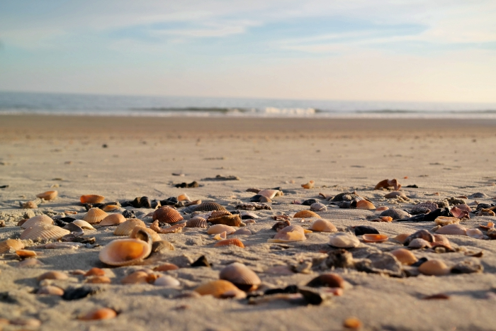 Myrtle Beach Seashells