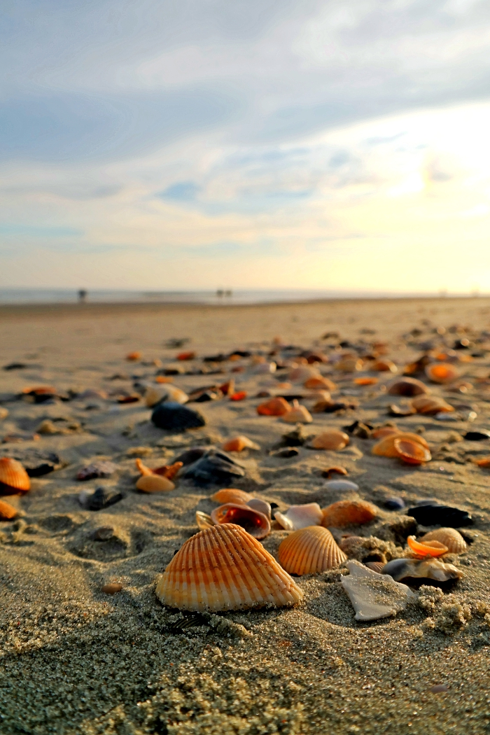 Myrtle Beach Shelling