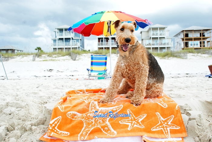 Florida's Best Kept Secret Cape San Blas Dog Friendly Beach