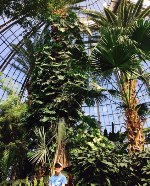 Anna Scripps Whitcomb Conservatory Palm House