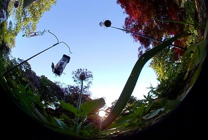 Monster Digital Vision 360 Camera Birds