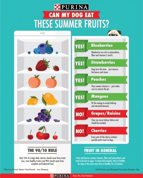 Summer Pet Safety Fruits For Dogs
