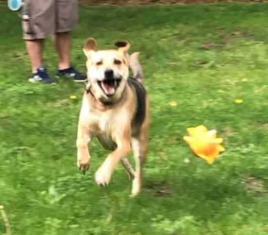 Summer Safety Happy Dog