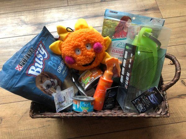 Summer Pet Safety Travel Kit