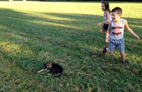 Bloodhound Mix Kids