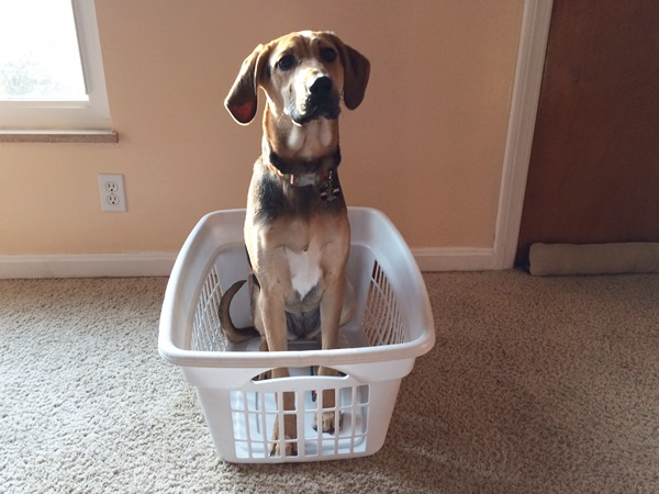 Yoshi in Laundry Basket Featured