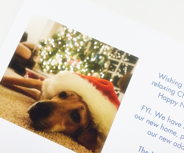 Five Ways To Include Your Dog In Your Holiday Festivities