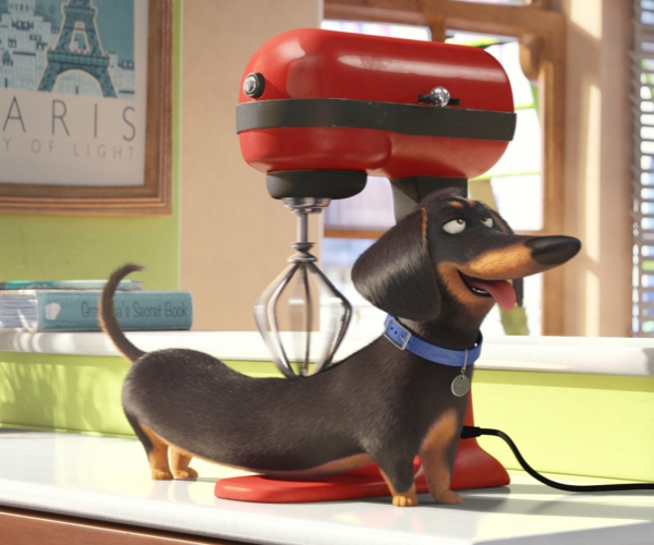 Have Your Kids Started The Countdown Yet? The Secret Life Of Pets In Theaters July 8