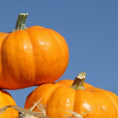 Fall Festivals In Michigan