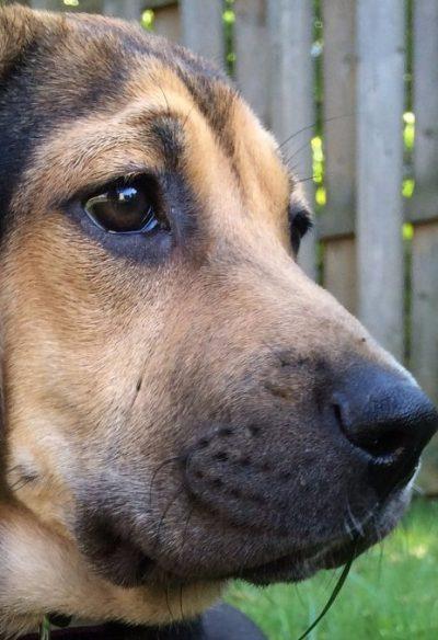 Yoshi Puppy Featured
